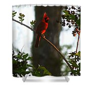 Cardinal In The Crepe Myrtle Shower Curtain
