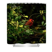 Cardinal In The Trees Shower Curtain