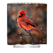 Cardinal On A Snowy Day Shower Curtain