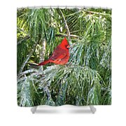 Cardinal On Ice Shower Curtain