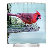 Cardinal Perched Shower Curtain