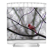 Cardinal Perched On A Branch Shower Curtain