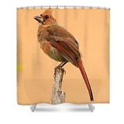 Cardinal Portrait Shower Curtain