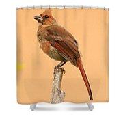 Cardinal Portrait Shower Curtain by Karen Lindquist