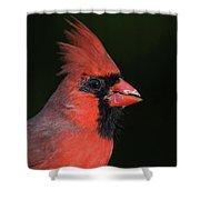 Cardinal Portrait Shower Curtain