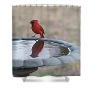 Cardinal Reflection Shower Curtain