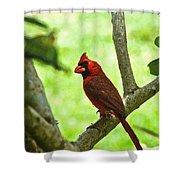 Cardinal Render Shower Curtain