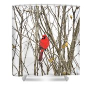 Cardinal Resting Shower Curtain