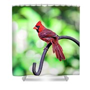 Cardinal Rule Shower Curtain