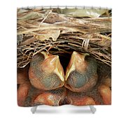 Cardinal Twins - Snugly Sleeping Shower Curtain by Al Powell Photography USA