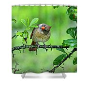 Cardinal Ways Shower Curtain