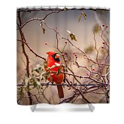Cardinal With A Mouthful Of Hips Shower Curtain
