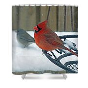 Cardinals Snow Day Shower Curtain