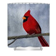 Cardnial Shower Curtain by Tracey Goodwin