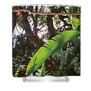 Caribbean Banana Leaf Shower Curtain