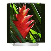 Caribbean Color Shower Curtain