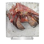 Caribbean Hermit Crab Shower Curtain