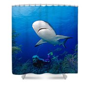Caribbean Reef Shark Shower Curtain by Dave Fleetham - Printscapes