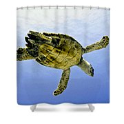 Caribbean Sea Turtle Shower Curtain