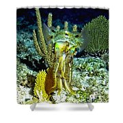 Caribbean Squid At Night - Alien Of The Deep Shower Curtain