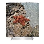 Caribbean Starfish Shower Curtain