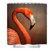 Caribean Flamingo Portrait Shower Curtain