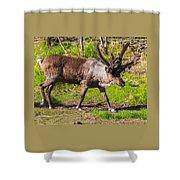 Caribou Antlers In Velvet Shower Curtain
