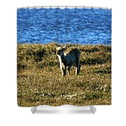 Caribou Fawn Shower Curtain
