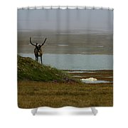 Caribou Fog Shower Curtain
