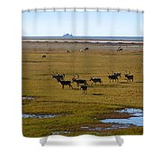 Caribou Herd Shower Curtain