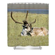 Caribou Rest Shower Curtain