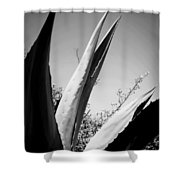 Carmel Mission Agave In B And W Shower Curtain