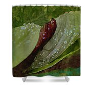 Carmella Dew Drops 1 Shower Curtain by Kate Word