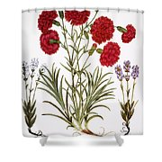 Carnation & Lavender, 1613 Shower Curtain