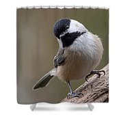 Carolina Chickadee 2 Shower Curtain