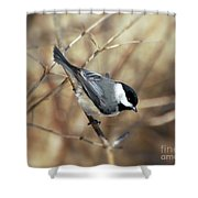 Carolina Chickadee - Birds At Bisset Park Shower Curtain