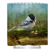 Carolina Chickadee Feeding Shower Curtain