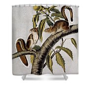 Carolina Grey Squirrel Shower Curtain