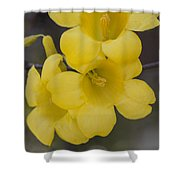 Carolina Jessamine Shower Curtain