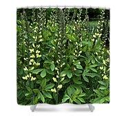Carolina Moonlight Shower Curtain