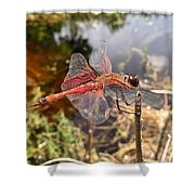 Carolina Saddlebag Dragonfly Shower Curtain