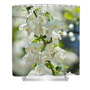 Carolina Silverbells In Spring Shower Curtain
