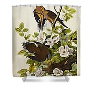 Carolina Turtledove Shower Curtain by John James Audubon