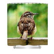 Carolina Wren Shower Curtain