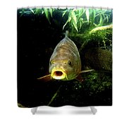 Carp Shower Curtain