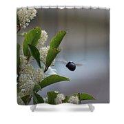 Carpenter Bee In Flight Shower Curtain
