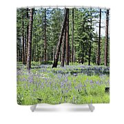 Carpet Of Lupine In Washington Forest Shower Curtain