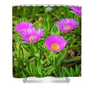 Carpobrotus Edulis Pink Ice Plant Shower Curtain