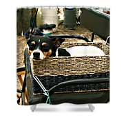 Carriage Dog Shower Curtain