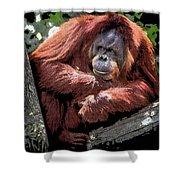 Cartoon Comic Style Orangutan Sitting In Tree Fork Shower Curtain